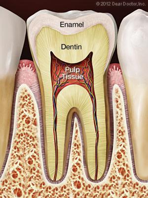 https://burnabysquaredental.com/wp-content/uploads/2016/08/healthy-tooth.jpg